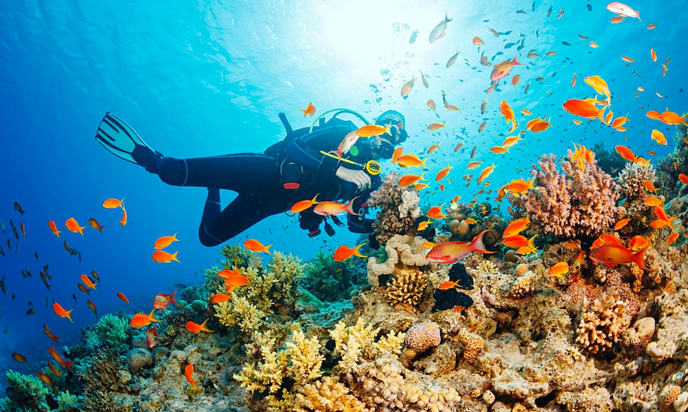 Hurghada Diving - Things to Do in Hurghada - Egypt Tours Portal