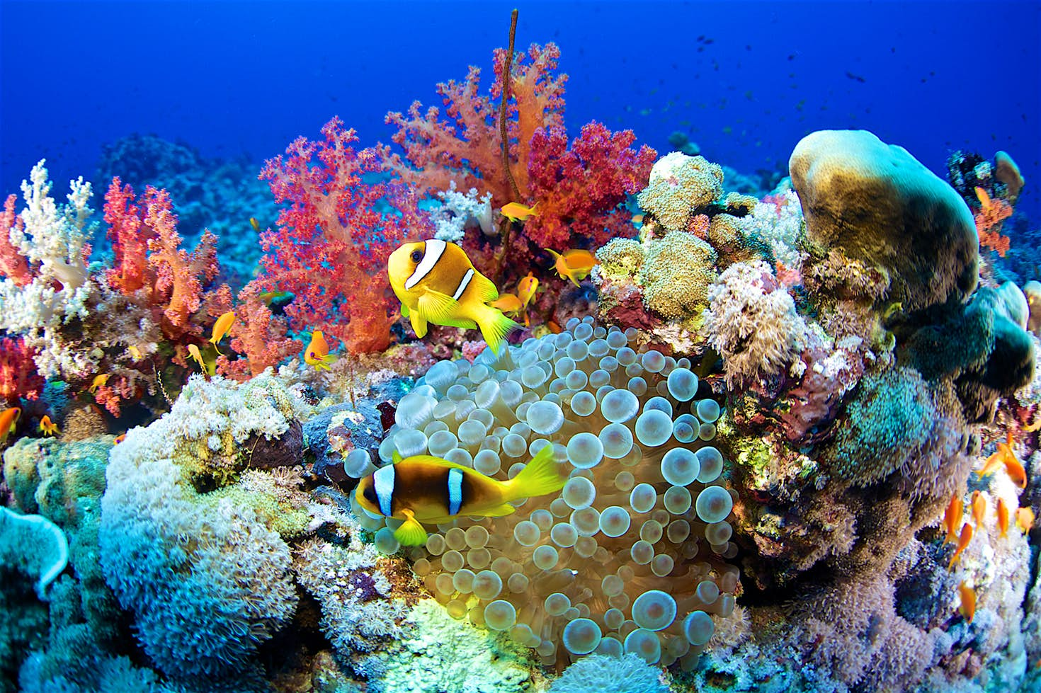Straits of Gubal - Things to Do in Hurghada - Egypt Tours Portal