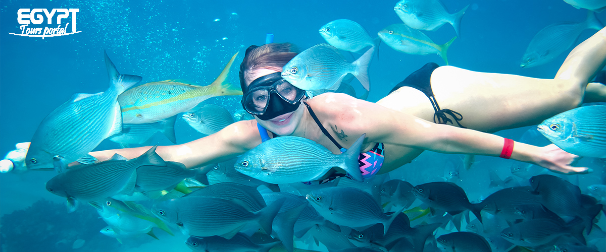 Snorkeling - Things to Do in Port Ghalib - Egypt Tours Portal